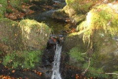 Woodland-walk-at-Glendaruel-caravan-Park