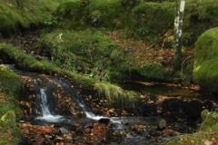 woodland-walk-Glendaruel-caravan-park